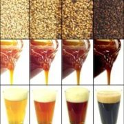 Sugars & Fermentables